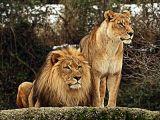 Read more: Zoo Emmen